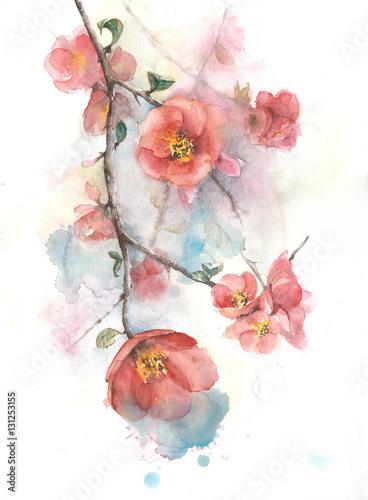 Pigwa kwitnie wiosny kwitnienia okwitnięcia akwareli obrazu drzewną ilustrację