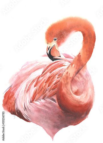 Fotografie, Obraz  Flamingo pink bird portrait watercolor painting illustration isolated on white b