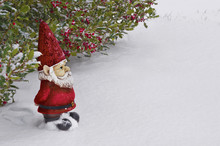 Gnome With Red Hat And Suit Standing In The Snow/ Gnome With Red Hat And Suit Standing In The Snow Under A Holly Tree With Red Berries