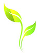 Vector stylized natural silhouette of leaf isolated on white. Ecology sign.