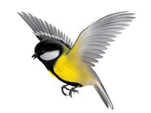 Bird Titmouse Illustration