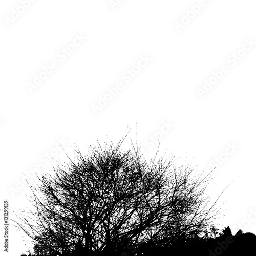 Cuadros en Lienzo Realistic silhouette of bush with bare branches (Vector illustration)