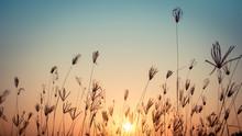 Silhouette Of Grass Flower On Sunset