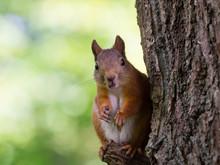 Funny Squirrel 1