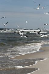 Fototapeta Morze Mewy nad Bałtykiem