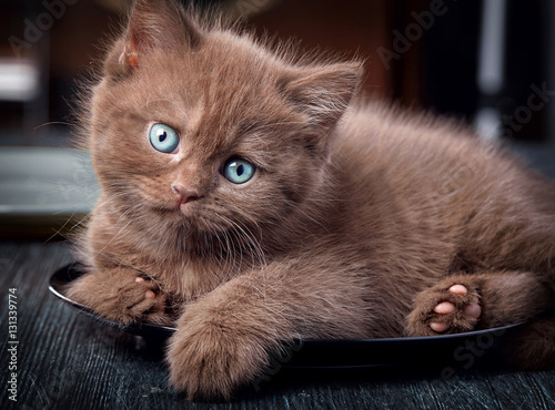 Brown kitten on black plate