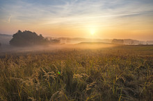 Misty And Sunny Morning In The Countryside