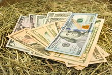 Image Of Dollars Money On Hay ...