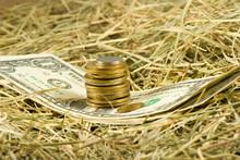 Image Of Dollars Money On Hay ...