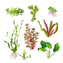 Aquarium Plants Set. Cartoon U...