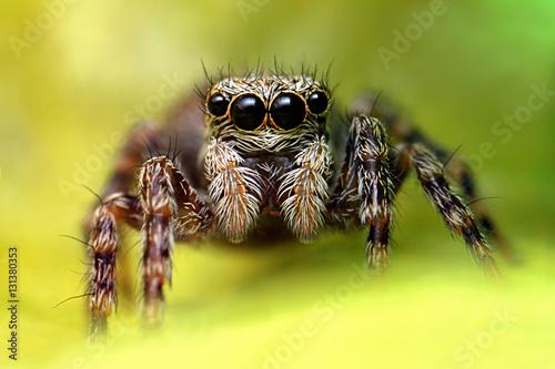 Fototapeta pająk obraz