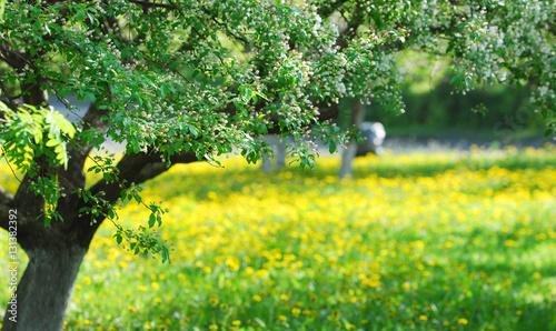 In de dag Begraafplaats Flowers of apple