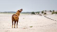 Assateague Wild Pony