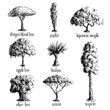 Set Of Hand Drawn Tree Sketche...
