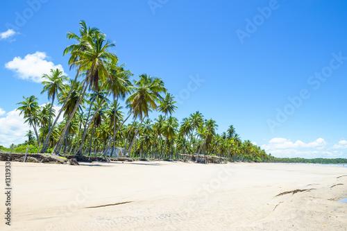 Foto op Plexiglas Caraïben Palm trees stand tall over a wide remote tropical Brazilian island beach along the Coconut Coast in Bahia, Nordeste Brazil