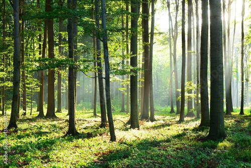 Fotobehang Bossen Morning in the forest