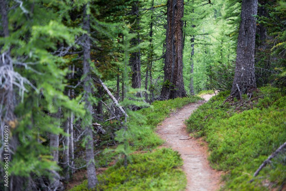 Fototapety, obrazy: Numa Creek Trail