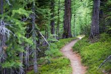 Numa Creek Trail
