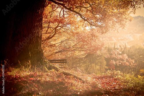 Garden Poster Brown Herbst