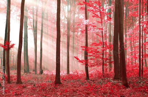 Photo  magic forest