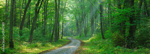 Papiers peints Forets Footpath through Forest of Beech Trees illuminated by Sunbeams through Fog