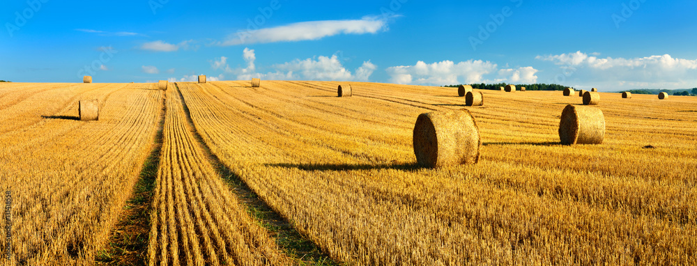 Fototapeta Bales of Straw in Endless Stubble Field during Harvest, Summer Landscape under Blue Sky