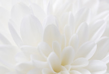 White Flower As Background