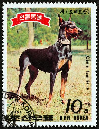 Fotografia  Dobermann Pinscher dog(North Korea 1989)
