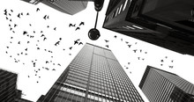 Silhouettes Of Pigeons Between The Skyscrapers Of Manhattan