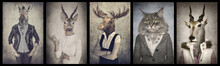 Animals In Clothes. Concept Gr...