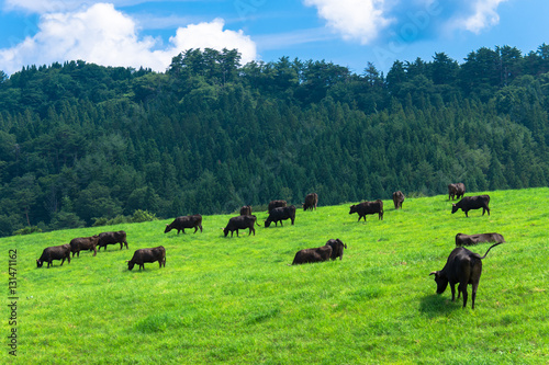 Foto op Aluminium Jacht 高原の黒毛牛