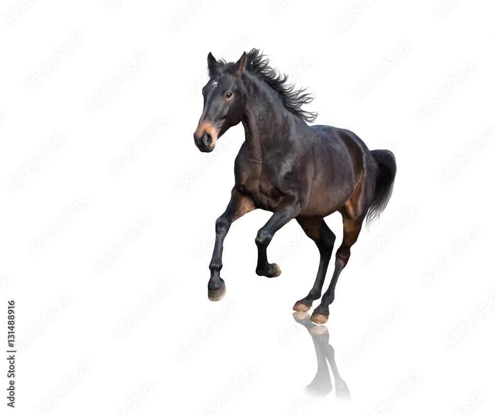Isolate of brown horse running on white background