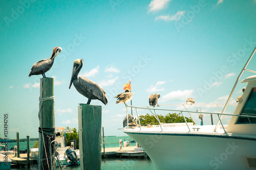 Valokuva  Toned nautical scene with pelicans on wooden post at pier with boat in the backg