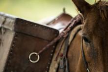 Closeup Saddle Bag On Horse