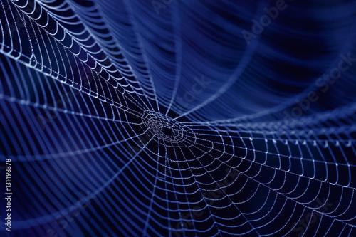 Obraz na plátně Spider Web as concept  of the Internet