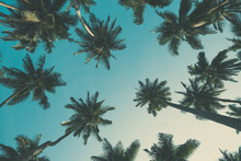 Vintage Toned Tropical Palm Trees At Summer, View From Ground Up To The Sky