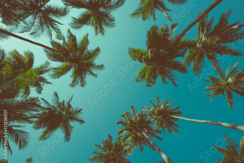 Vintage toned different tropical palm trees at summer tropical island beach, view from bottom up to the sky background
