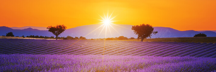 Fototapeta Lawenda Lavender field summer sunset landscape