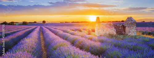 Photo  purple lavender filed in Valensole at sunset