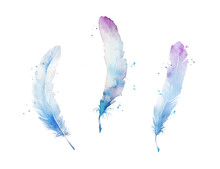 Set Of Watercolor Feathers, Ha...