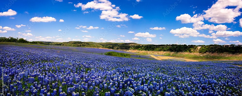 Fototapety, obrazy: Field of Blue Panorama