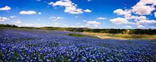 Field Of Blue Panorama