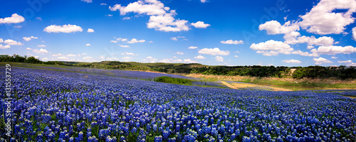 Photo Stands Landscapes Field of Blue Panorama