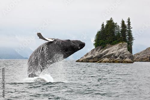 Photo Alaska. Humpback whale breaching jumping.