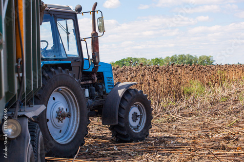 Fotografie, Obraz  Big blue tractor with a trailer loaded with sunflower seeds close-up on the field