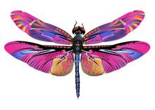 Vector Color Art Dragonfly Nat...