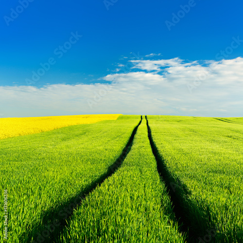 Poster Jaune Field of Rapeseed and Barley, Spring Landscape under Blue Sky