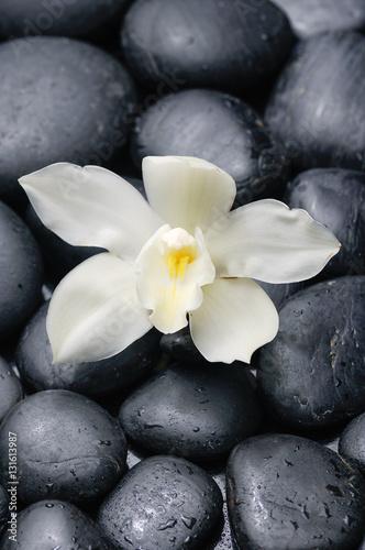mokry-bialy-kwiat-storczyka-z-czarnymi-kamieniami