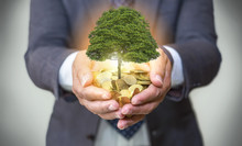 Hands Holding A Tree Growing O...