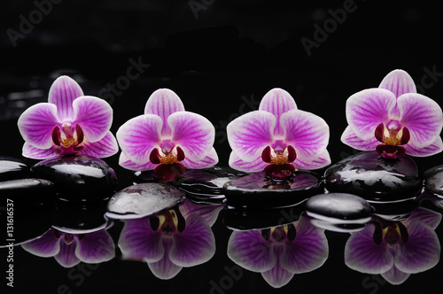 Obraz still life with black stones and gorgeous orchid - fototapety do salonu